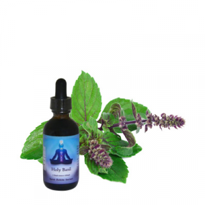 Holy Basil Extract, 2 oz.