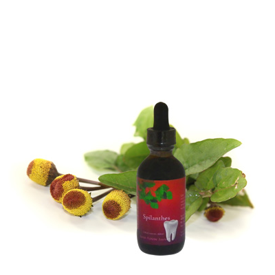 Spilanthes Extract, 2 oz.